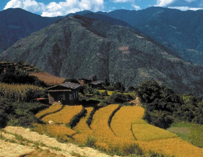 Central to making farming more environmentally friendly, and so preserving and restoring such magnificent landscapes as this one in Bhutan, is the application of integrated pest management. This includes adopting farm practices that encourage the natural enemies of insect pests, such as spiders ), and so eliminating the market for toxic and often misapplied pesticides. (Photo: Gene Hettel)