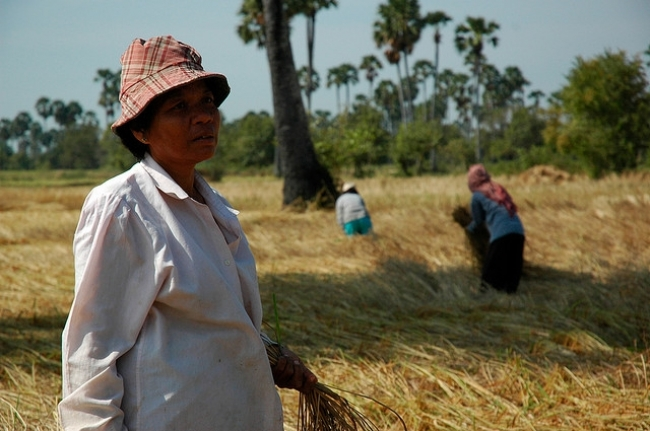 CAMBODIAN RICE FARMER, Marie, is participating in a field trial that should enable her and her fellow farmers to grow more rice while saving money and resources that can be invested in other crops. (Photo: Lehame Fountain)