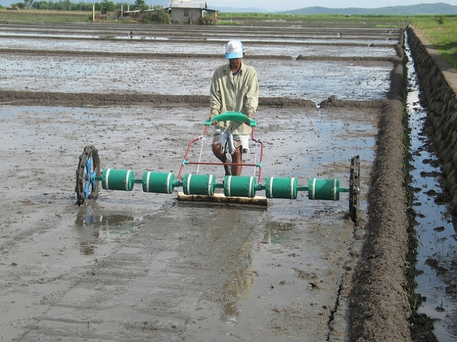 A PLASTIC DRUM SEEDER holds six or eight perforated cylindrical drums housing pregerminated seeds that are dropped in rows as the seeder is easily pushed or pulled along by a single person — like Filipino farmer Jimmy Gonzales — at walking pace. (Photo: Ma. Romilee Bool)