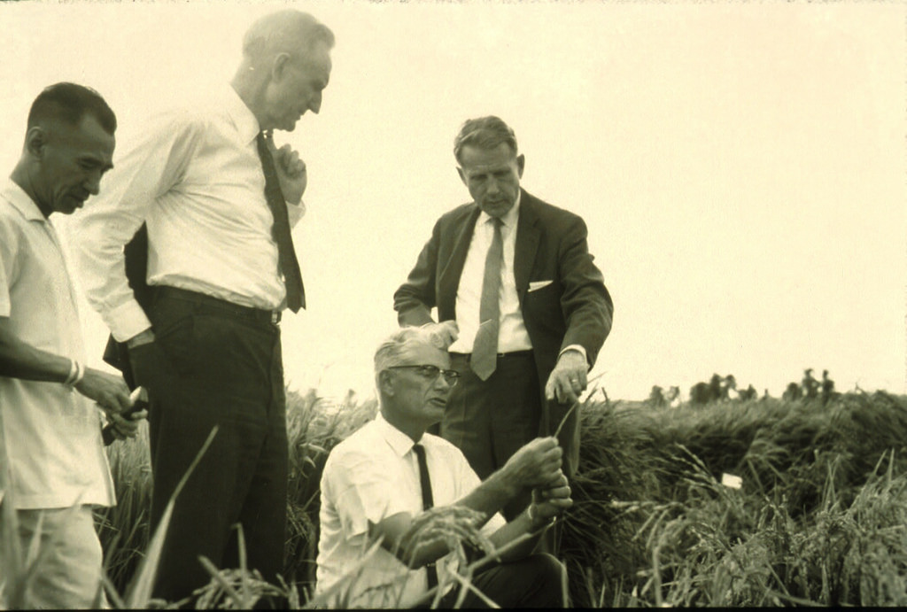 Examining IR8 in the Institute fields in August 1967 are IRRI breeder Hank Beachell (crouching), visiting philanthropist John D. Rockefeller III (left), and IRRI Director Robert Chandler. (Photo Urbito Ongleo)