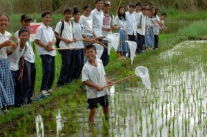 High school students at the Binulasan Integrated School in Quezon, Philippines, are all smiles during a hands-on exercise on pest management in their school's rice paddy. (Photo: Jose Raymond Panaligan)