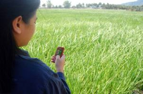 """Farmers in the """"texting capital"""" of the world—the Philippines—will soon have nutrient management advice tailored specifically to their rice crops delivered to their mobile phones."""