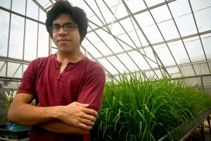 Aryo Feldman is involved in IRRI's C4 rice project, which is looking to introduce characteristics of the C4 photosynthetic pathway of crops such as maize into rice, which could significantly raise the potential yield of tropical rice.