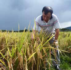 Dr. Zhikang Li, IRRI molecular geneticist and head of the GSR project, believes it is possible to combine sustainable food production and environmental preservation through GSR varieties. (Photo: Jauhar Ali)