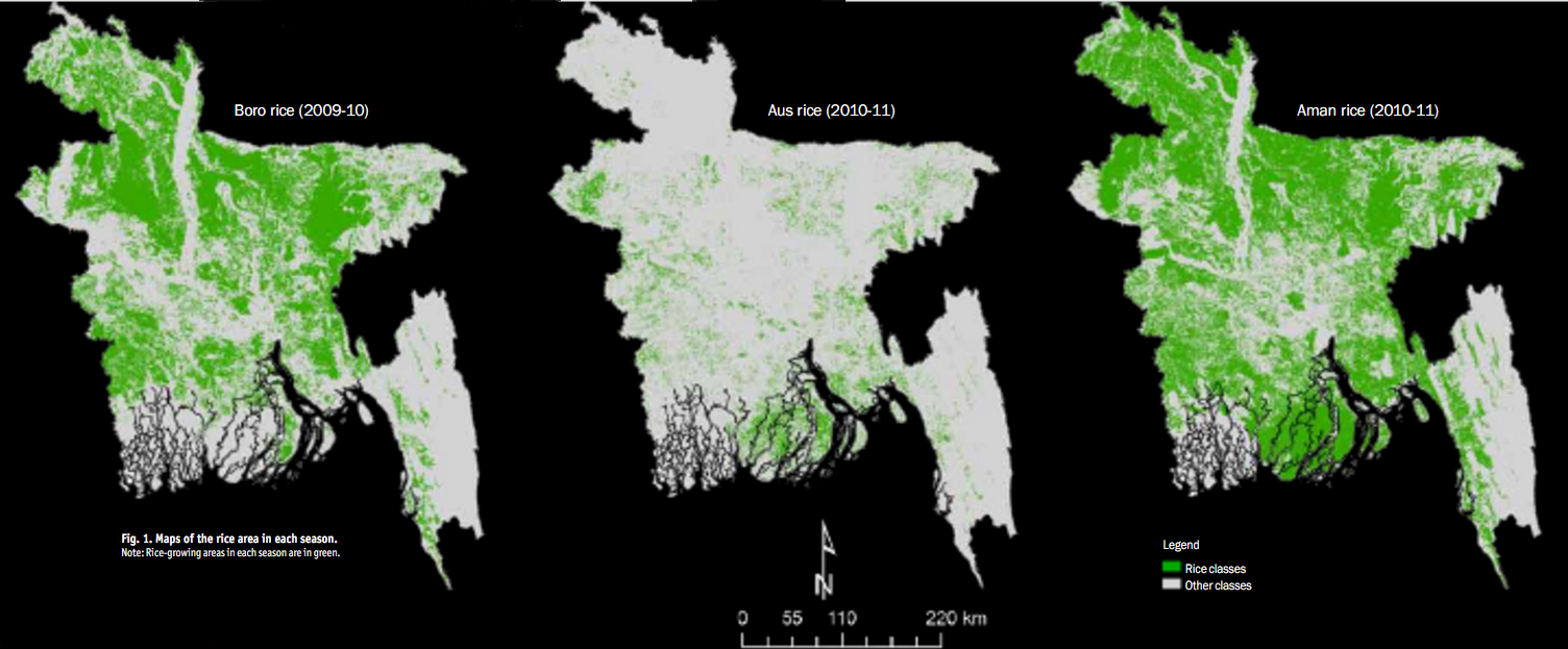 Fig. 1. Maps of the rice area in each season. Note: Rice-growing areas in each season are in green.