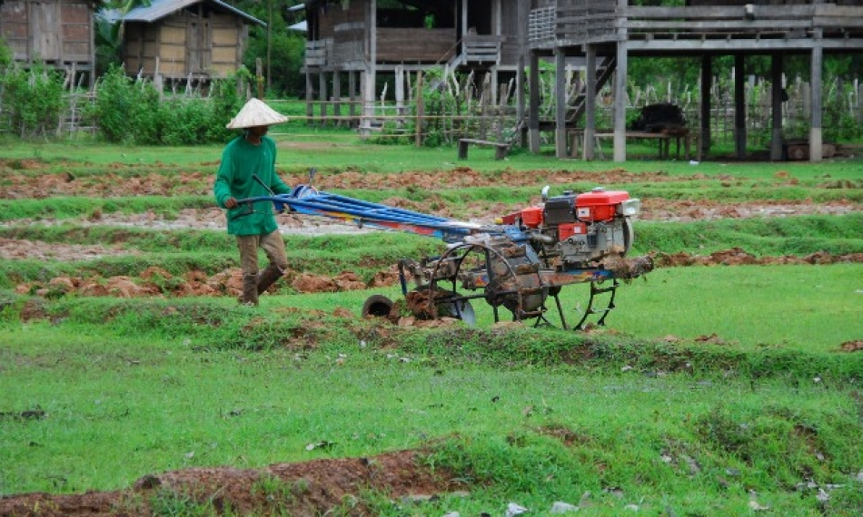 In Lao PDR, rice production is an important livelihood of 724,000 farmers. (Photo: IRRI)