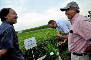 Dr. Cesar  Martinez (far right) shows CIAT's experimental rice fields to GRiSP scientists. (Photo: Neil Palmer, CIAT)