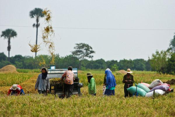 Rice farming machine
