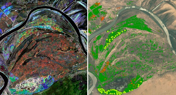 Rice classification of rice (green) and late rice (orange) superimposed on a Google Earth image. The green dots are field verification points of rice.