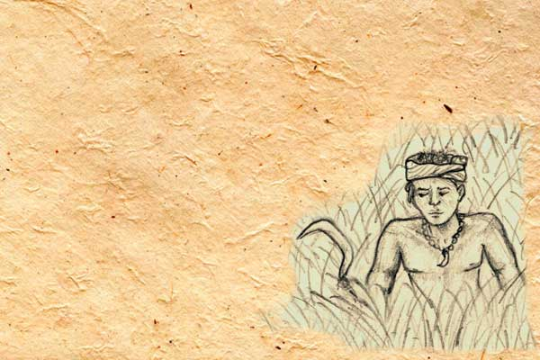Illustration of a young boy from the Ao Naga tribe learning the true value of rice