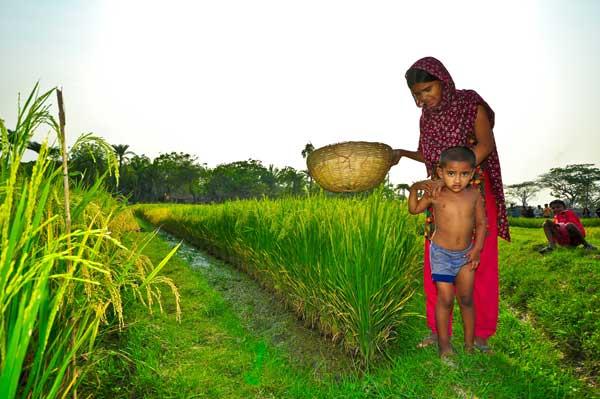 Rice field in South Asia (Photo: Isagani Serrano)