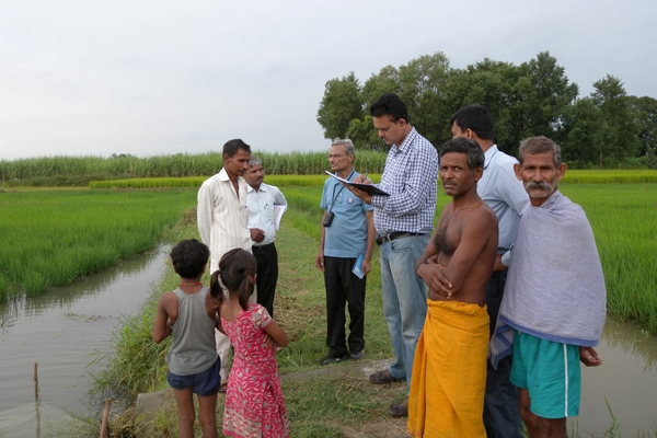 SUDHANSHU SINGH (in checkered shirt) talks with the farmers in a village in Odisha to monitor the performance of flood-tolerant Swarna-Sub1 (background) after it went through a flood