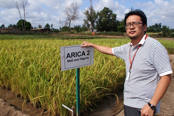 DR. SAITO'S WORK has led to a refocus of upland rice breeding work at AfricaRice, which now includes aus and indica materials.