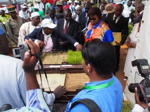 (Photo: R Raman, AfricaRice)
