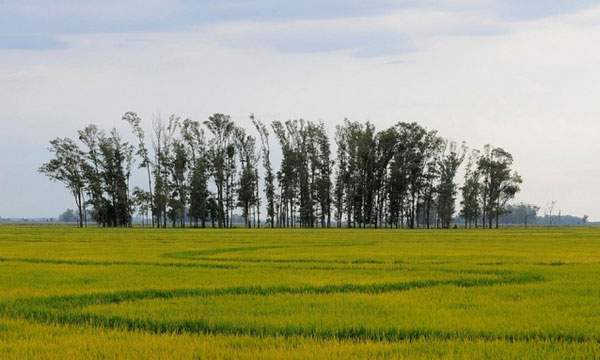 The key to Uruguay's competitive and successful position as a rice exporter was the private and public institutional array of support that was constructed over time. (Photo by Neil Palmer, CIAT)
