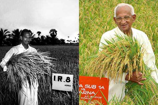 NEKKANTI SUBBA RAO helped kickstart both the first and second Green Revolutions in India by promoting and distributing IR8 in 1967 and Swarna- Sub1 in 2009. (Photos: IRRI ARCHIVES and Manzoor Hussain Dar, IRRI)