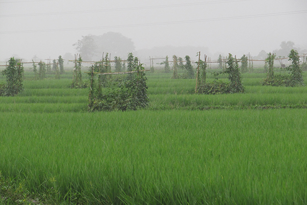 HIGH-DIVERSITY vegetation patches on an ecological engineering farm in Bukidnon, Mindanao, Philippines. (Photo: Finbarr Horgan)