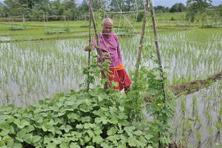 FARMER observes a vegetation patch with okra, mungbean, string bean, and bitter gourd within a rice landscape. (Photo: Finbarr Horgan)
