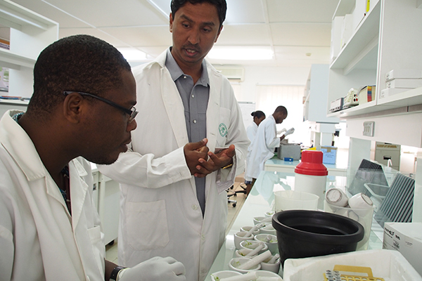 "DR. RAMAIAH confers with Arnaud Gouda, a research technician in the AfricaRice Biotechnology Laboratory, where they are ""mining"" for alleles in the genebank. (Photo: R Raman, AFRICARICE)"