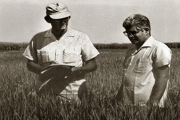 In 1965, the Indian Council of Agricultural Research (ICAR) appointed S.V.S. Shastry, a distinguished breeder and geneticist, as its first coordinator and project leader while the Rockefeller Foundation designated Wayne Freeman as the joint coordinator. Dr. Freeman also later served with distinction as IRRI's first representative in India. (Photo: DRR)