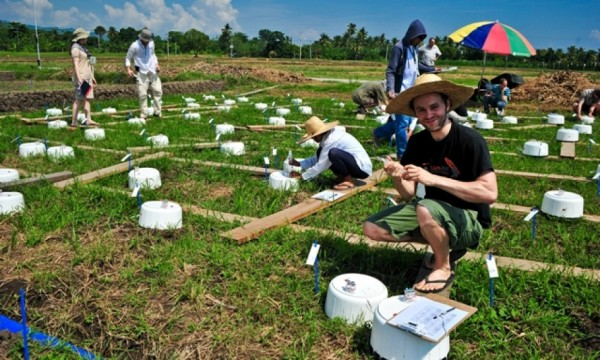 German students get involved in taking measurements of greenhouse gas emissions from rice. (Photo: Isagani Serrano)