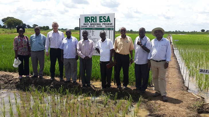 IRRI scientists and their partners work together to improve Tanzania's rice sector. (From left) Dr. Rosemary Murori, IRRI rice breeder; Dr. Joseph Bigirimana, IRRI coordinator in Eastern and Southern Africa; Dr. Matthew Morell, IRRI deputy director general for research; Mr. George Iranga, head of Chollima Research Centre; Dr. Mohammed Mkuya, IRRI researcher; Mr. Joel Absalum Zakayo, agronomist, Chollima Research Centre; Abdelbagi Ismail, IRRI principal scientist; Dr. Zak Kanyeka, IRRI rice breeder; and Dr. Setegn Gebeyehu, IRRI agronomist and seed specialist. (Photos by IRRI)