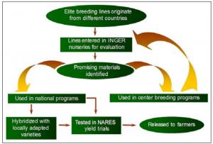 INGER primary mechanism of international nurseries