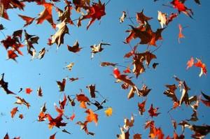 38. Fallen_leaves_11