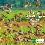 67. Cover_Guide to birds of Philippine rice fields