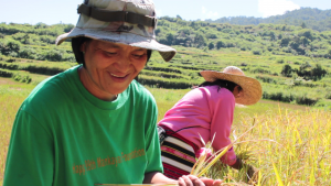 Thanks to heirloom rice Neneng is able to save money her family's needs and her children's education.