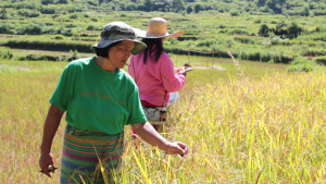 From a hesitant farmer, Neneng has become confident community leader and totally in her element working in their farm.