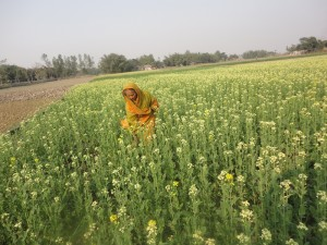 Women like Fatema Begum, a widow from a rural village in Bangladesh, now have access to new rice varieties and other crops. (Photo: GRiSP)