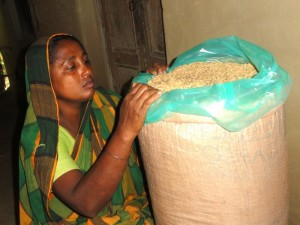 Selina Akter checks the condition of seeds before sealing the IRRI Super Bag. (Photo: GRiSP)