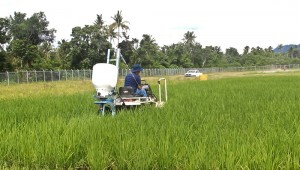 IRRI's postharvest team measured up to 9% yield increase using POLARO to apply urea and complete fertilizer. (Photo: Miriam Gummert, IRRI)
