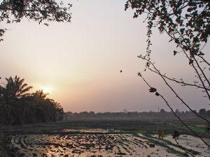Farmers' rice fields in M'bé.