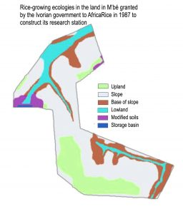 Figure 1. AfricaRice research station in M'bé has all the main rice-growing agro-ecologies.