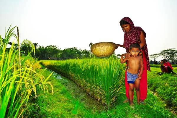 rice southasia