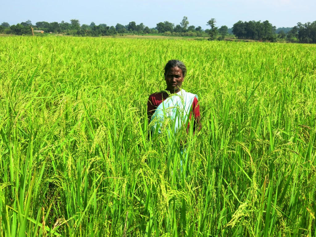 The formation of SHGs is a stepping stone for initiating and allowing change to happen in the lives of women farmers. (Photo: CSISA)