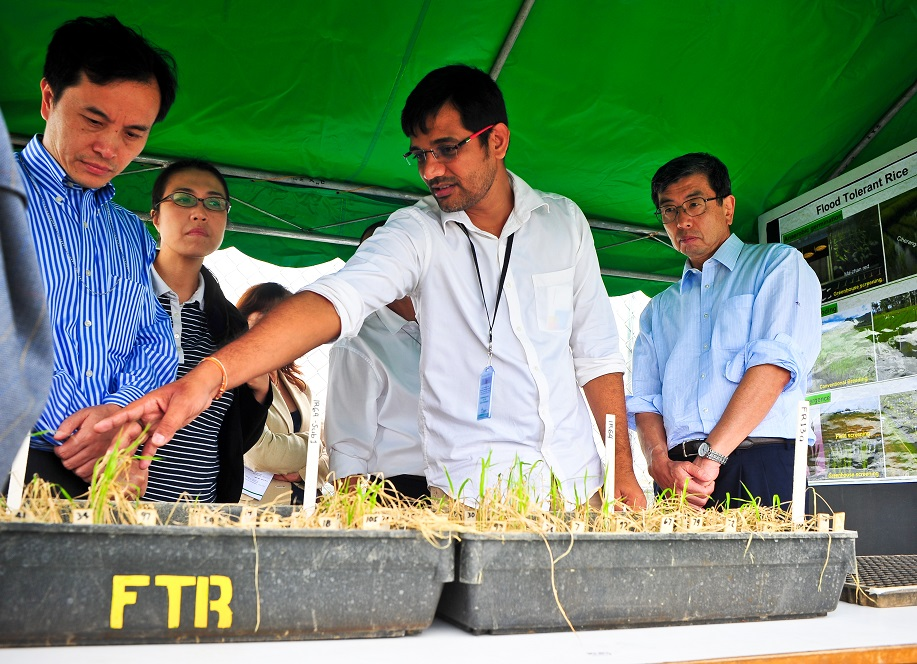 Through his research, Dr. Dixit (center) links the microscopic world of rice genes with the farmers that grow one of the world's critically important staple crops. (Photo: Isagani Serrano)