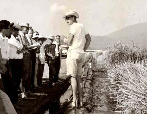 Dr. Jennings at IRRI in 1966.