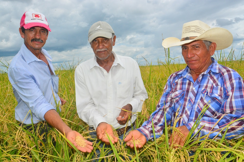 ARNULFO HERNÁNDEZ, Gustavo Romero, and Edel Chancanul, after dedicating much of their lives to farming, suffered the effects of NAFTA. But now they feel confident that Mexico´s rice sector will regain its strength. (Photo: CIAT)