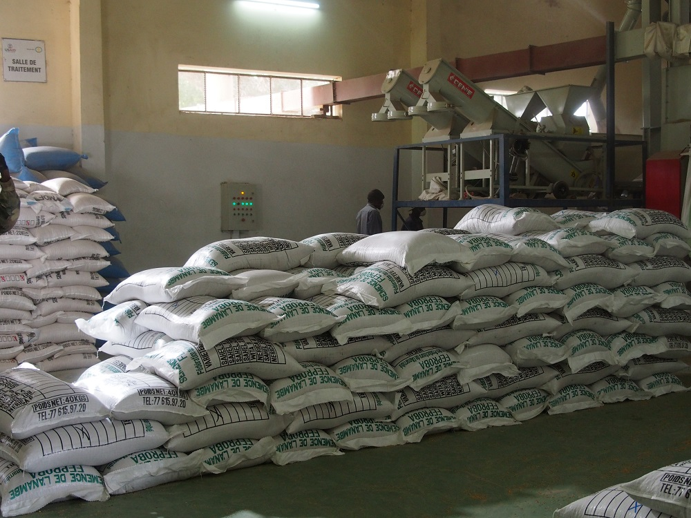 Seed growers are benefitting from the professional services of the Seed Treatment Center in Kolda. (Photo by R. Raman/AfricaRice)