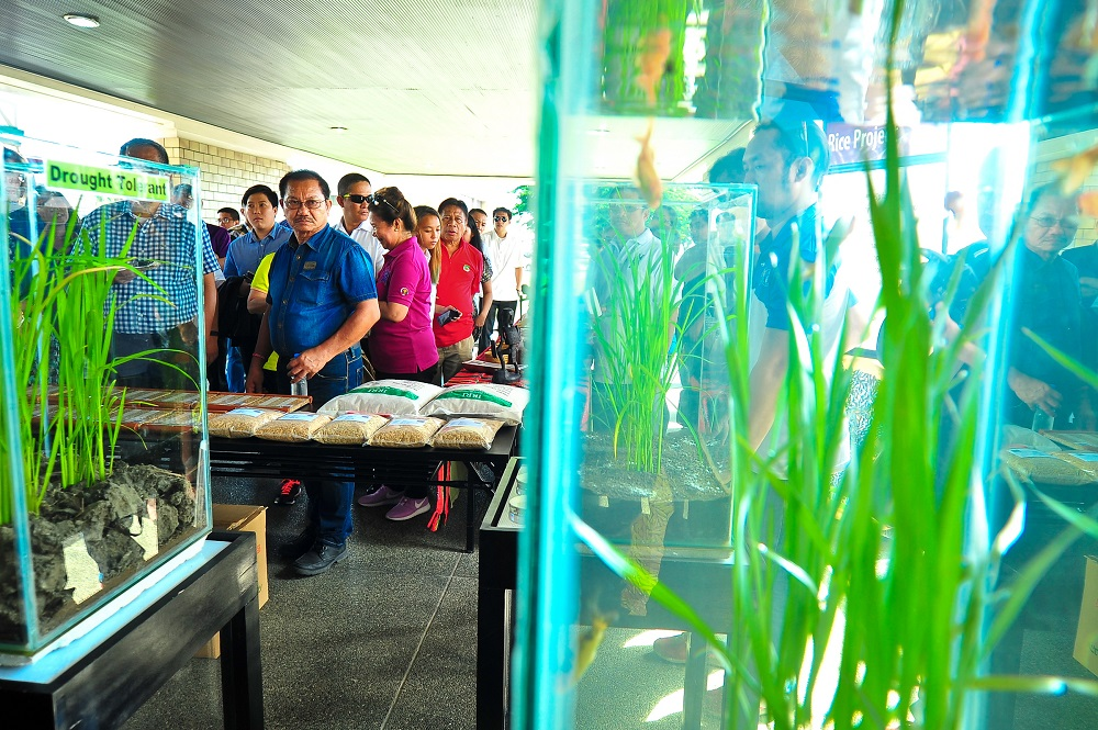 Secretary Piñol checks out packed seeds of modern rice varieties and the flood-tolerant scuba rice.