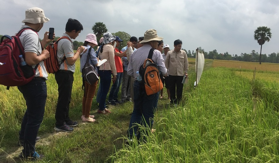 Mr. Chou Cheythyrith, EPIC project partner from GDA, (facing camera) explains the experiment on Trichoderma and pest-resistant rice varieties to visiting farmers and representatives from various NGOs, and public and private institutes. (Photos: EPIC project)