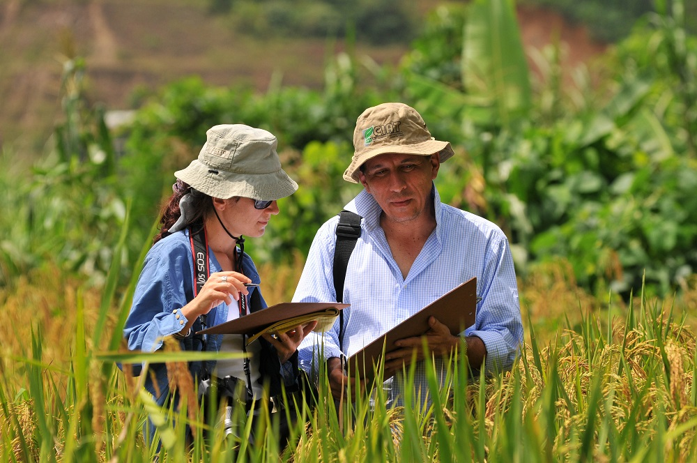 Cecile Grenier, a Cirad breeder working at CIAT, and Jaime Borrero, a CIAT research associate, inspect a rice field in Bolivia. (Photo: CIAT)