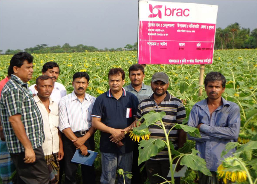 SIRAJUL ISLAM and his team visit a sunflower demonstration supported by BRAC. (Photo: BRAC)