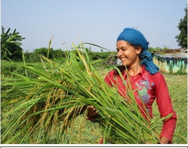 Leading by example, many farmers in the village are now following Nirmala Sapkota and her farming techniques as the changing climate continues to adversely affect small farmers. (Photo: STRASA)