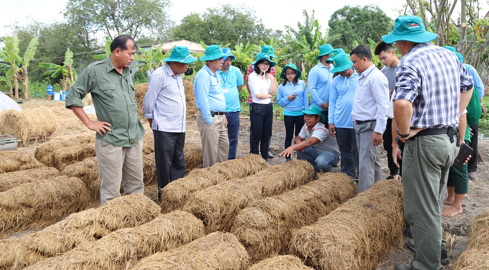 Participants from Cambodia and the Philippines study a technology developed by Can Tho University for using rice straw as a growing medium for mushroom. (Photo: IRRI)
