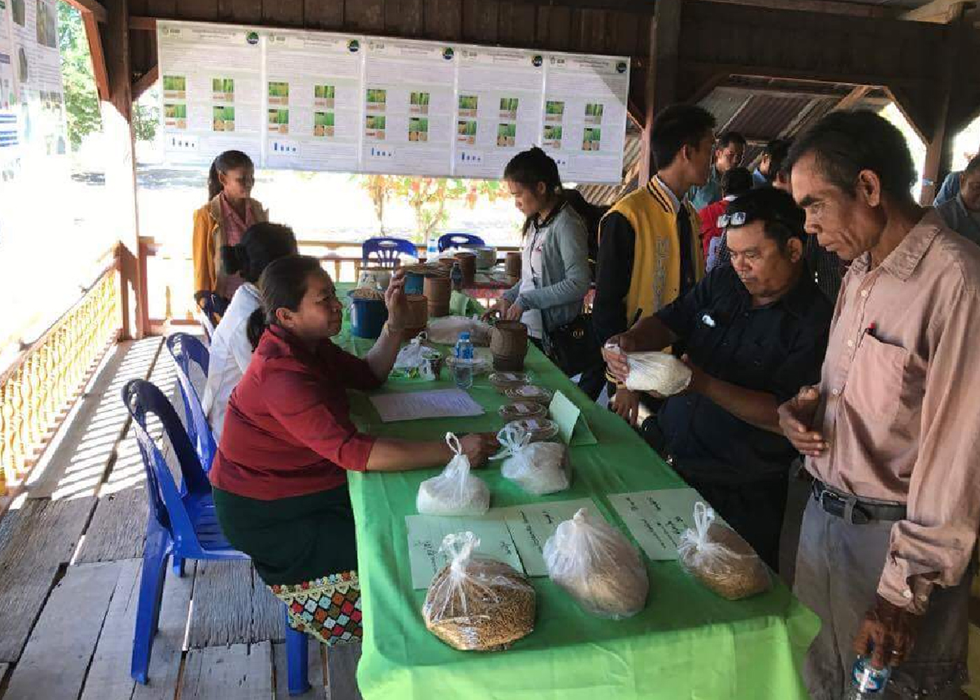The seed fair in Phailom CSV aims to establish a seed production system for a more sustainable supply of quality and resilient seeds in the village. (Photos: CCAFS)