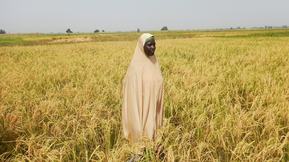 A FARMER in Nigeria has greatly benefited from RiceAdvice. (Photo by Phillip Onimisi Obosi, GIZ-CARI)